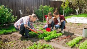 planter dans son jardin