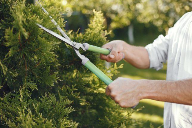 Pénurie de candidats en jardinerie paysagisme
